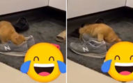奴才PO「貓咪狂吸主人鞋子」迷幻畫面 釣出一堆苦主:我的也被吸爆!