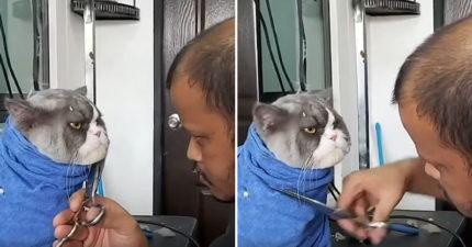 影/呆萌貓「理毛時狂瞪美容師」畫面被瘋傳 牠「全程眼神死」網笑翻:超厭世!