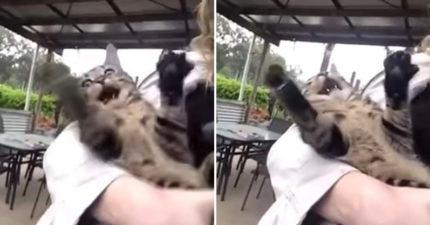 呆萌貓「第一次看下雨」影片被瘋傳 牠露出「超意外表情」網笑翻:像見鬼!