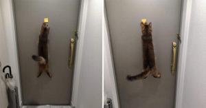 他分享「貓咪VS便利貼大戰」爆笑畫面 揭喵星人「超崩潰下場」網友:太賣力了!