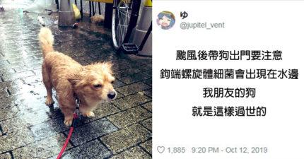 颱風走「馬上帶狗狗散步」其實會害了牠 水中恐怖細菌最嚴重可致命