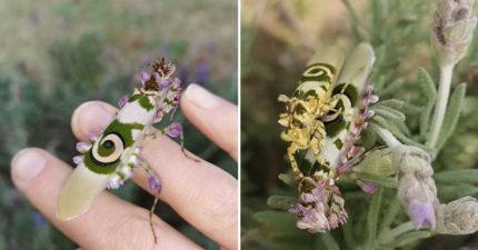史上最漂亮昆蟲「魔花螳螂」驚艷曝光 牠身上「佈滿彩色花瓣」見證大自然魔力!