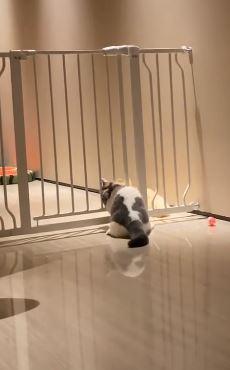 小胖貓想逃獄卻被「大屁股出賣」慘在狗室友面前卡住