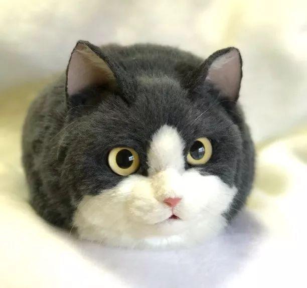 日設計師打造「1:1貓咪包」爆紅 連超萌「貓蛋蛋」都被完美複製!