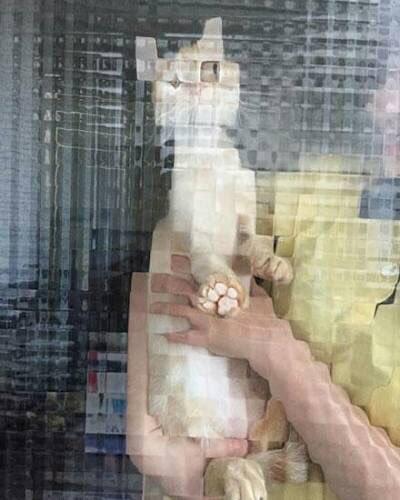 25隻不小心被拍到的超萌「崩壞像素貓」 隔著「方格玻璃窗」還是能感受到滿滿哀怨!