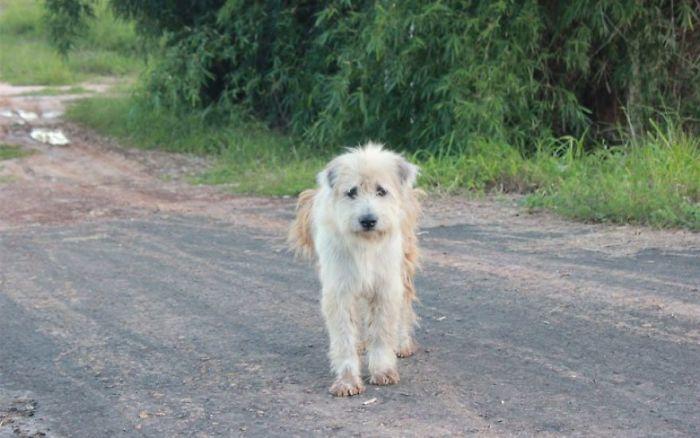 忠犬在路邊「等主人4年」下雨也不走 發文後「奇蹟找回主人」牠卻不想回家!