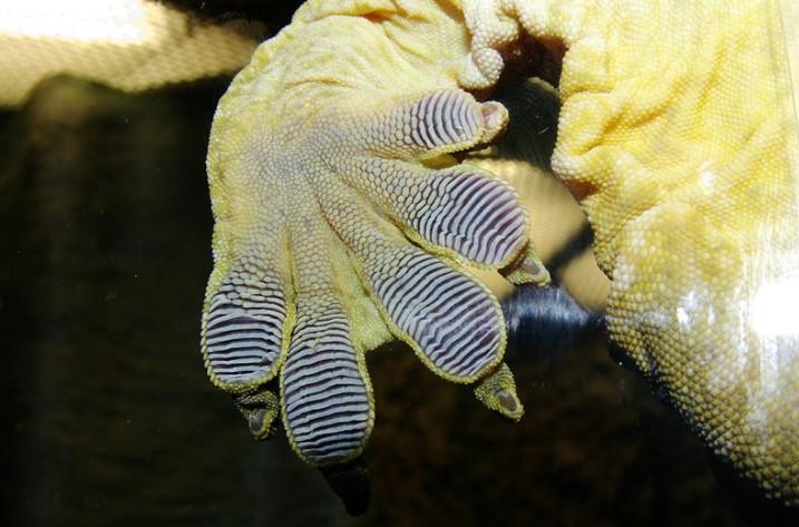 19張「平凡人絕對沒看過」的動物驚奇照 山羊的瞳孔竟然是長方形的!