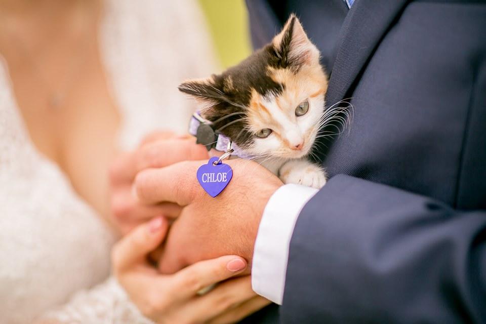 約好「結婚後不能養貓」讓貓奴妻超傷心 他婚禮準備「毛茸茸驚喜」讓新娘幸福淚崩
