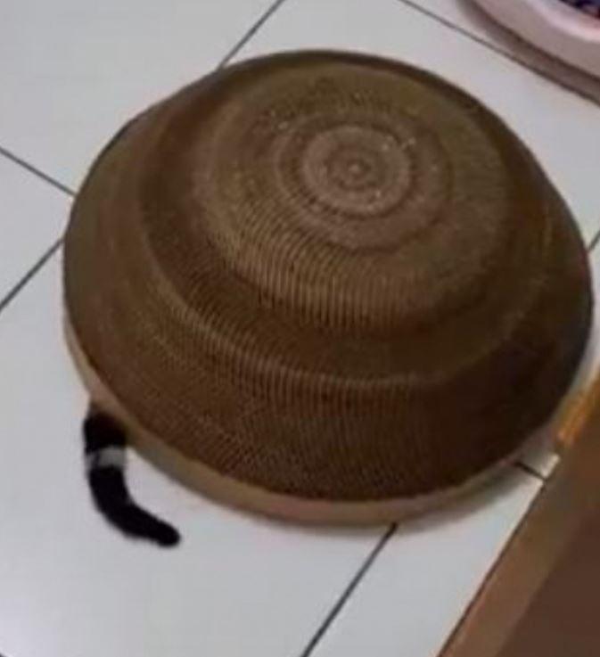 玩碟仙「卻請不走」他緊張向網友求救 下秒露出「超萌破綻」貓仙在作祟!