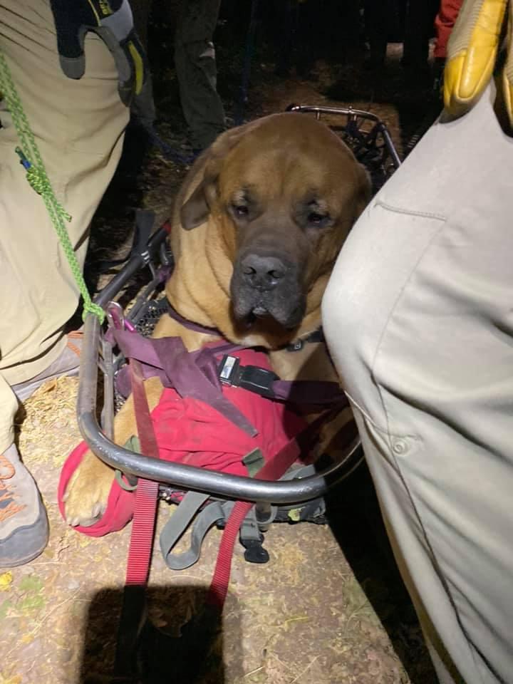 90公斤獒犬「爬山走不動」超無辜 救難隊「皇家待遇」護送下山