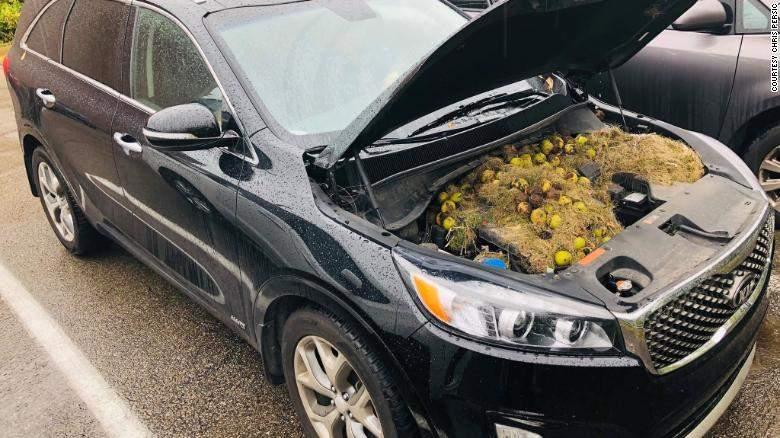 車子突然發不動…他打開引擎蓋驚見「200顆核桃」傻眼狂清 網友卻罵翻:松鼠怎麽辦?