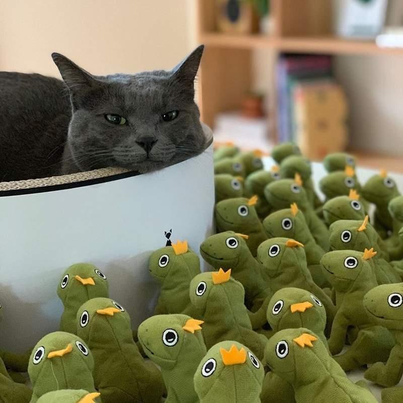 主人拍下「喵星人+青蛙大軍」爆笑日常 連睡著也「被幾百雙眼崇拜」...不愧是貓皇!