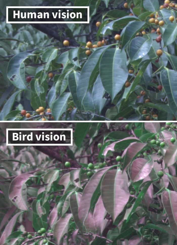 鳥的視力比人類還好!能看到「人類看不到」的顏色 黑鳥在牠們眼中其實超鮮豔