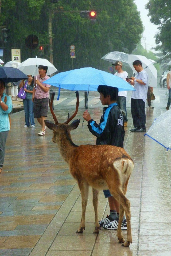 22張「生活處處有溫情」的感人照 小男孩在雨中「幫鹿撐傘」