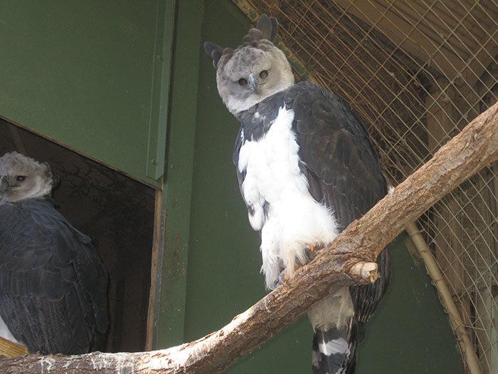 世界上最大的鳥!跟成年人並排「全身照」太可怕 像人一樣的「超帥側臉」卻顏值爆表
