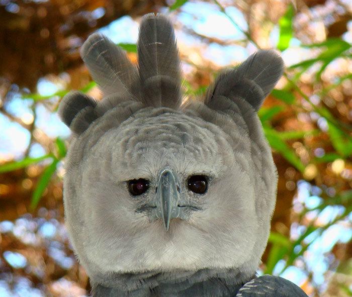 世界上最大的鳥!跟成年人並排「全身照」太可怕 「超帥側臉」顏值爆表