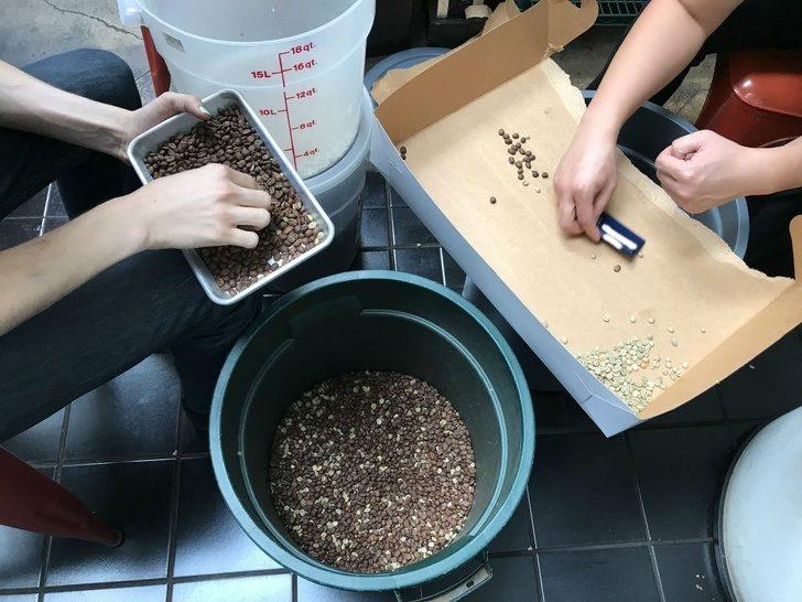 17個被公司「逼到人生谷底」的超絕望員工 徒手「挑1千顆咖啡豆」只因為老闆分心