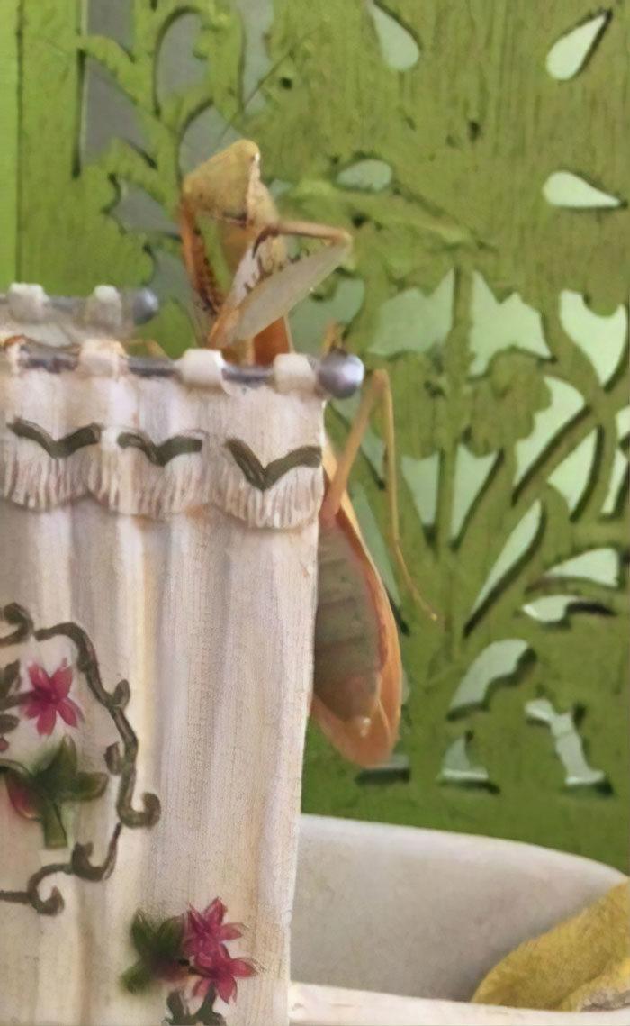 女子養超可愛「寵物小螳螂」 為牠買「迷你家具」玩耍模樣萌到讓你也愛上螳螂!