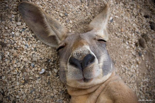 20個無時無刻「都能超chill」的可愛動物 栽進盆栽還是睡超爽!