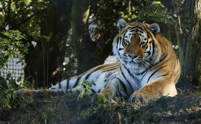 34個「看完會嚇一跳」的驚人動物冷知識 貓皇真的不把奴才當人看!