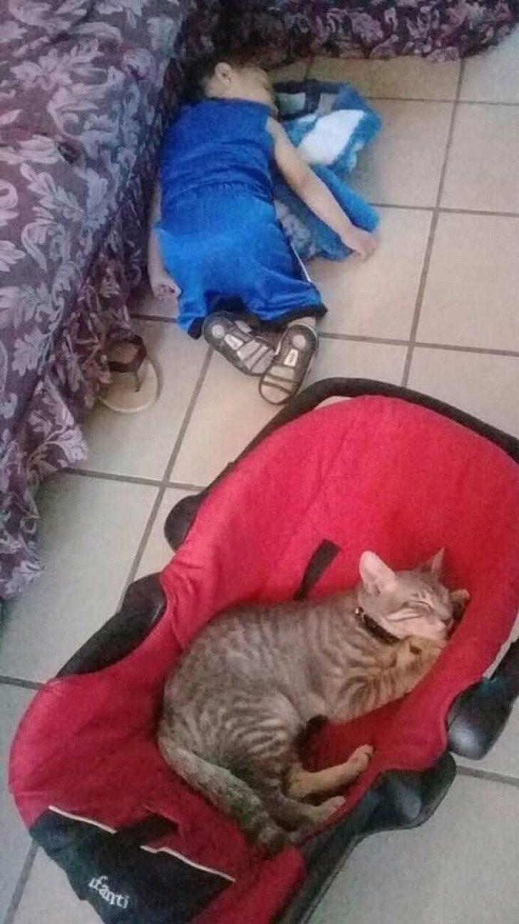18張「證明貓咪是外星人」的搞怪爆笑照 牠「跟地毯融為一體」主人現在都找不到!