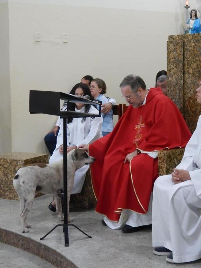 神父經常「帶流浪狗上教堂」引起關注 他曝光「超感人原因」被讚爆:社會英雄