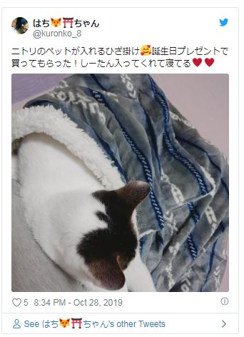 宜得利推新款膝上毯!超大口袋「毛孩最愛」窩在裡面睡 呆萌表情融化全網❤