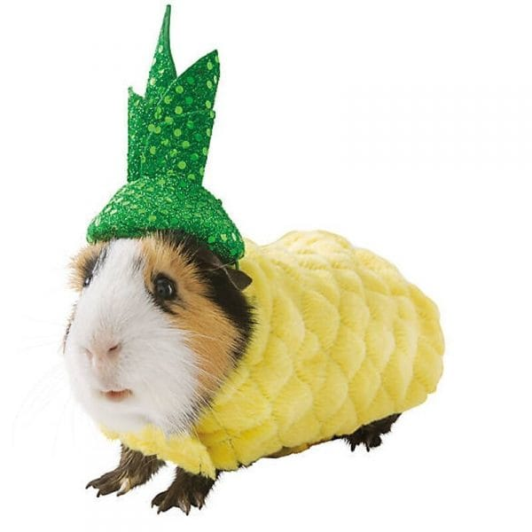 國外推「寵物萬聖節Cosplay裝」主人瘋搶 天竺鼠「變身彩虹獨角獸」表情超可愛!