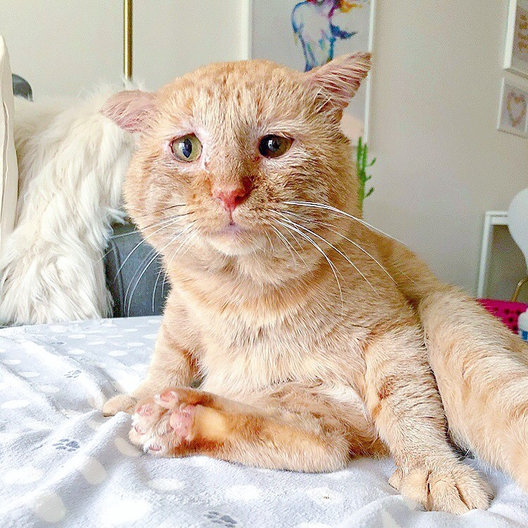 房東不給養寵物 她拿出收容所「超悲情橘貓照」讓房東秒妥協:看你養吧...