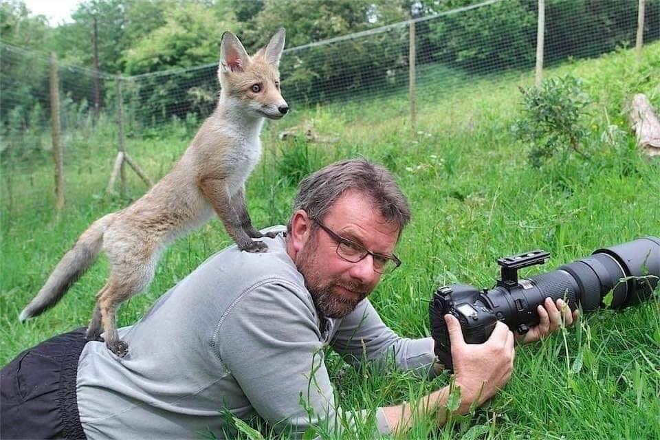 12張調皮動物「決定來整攝影師」的逗趣互動照