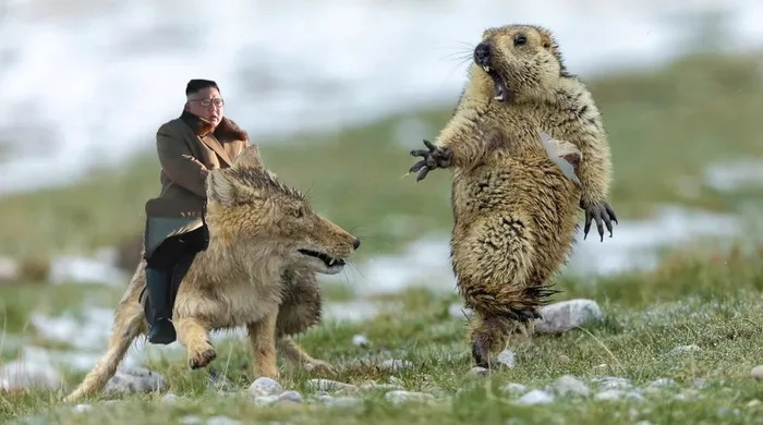土撥鼠的「生死一瞬間」太戲劇 網友手癢把金正恩也P進去!