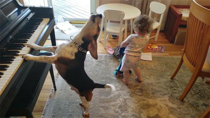 影/妹妹想跳舞「愛犬幫伴奏」吸百萬點閱 網看到「牠高歌畫面」被萌翻!