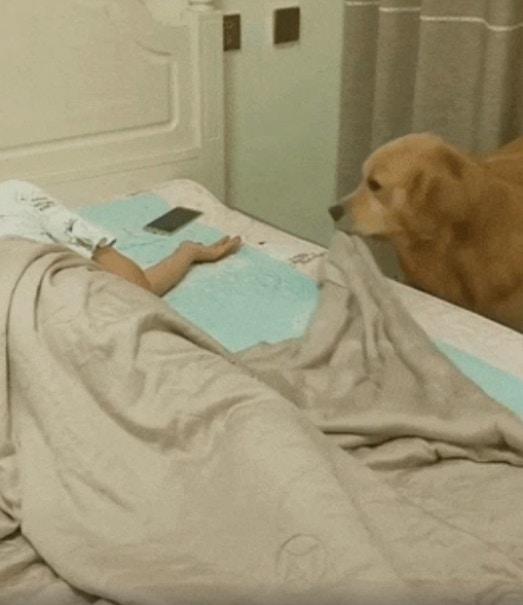 影/貼心狗幫主人完成「睡前三部曲」 牠「最後一個步驟」太可愛:根本前世情人