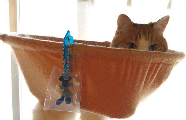 小橘喵窩在吊床裡耍廢 鏡頭往下卻拍到「超驚悚畫面」網全笑翻:被出賣了!