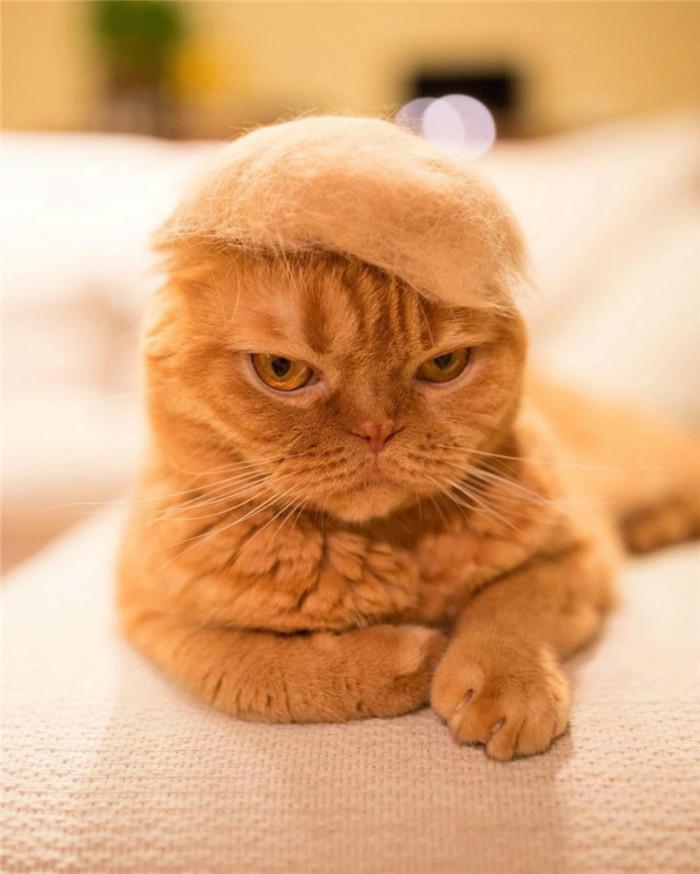 貓奴用「廢貓毛」客製成超萌小帽 混色之後出現「喵蘑菇」!