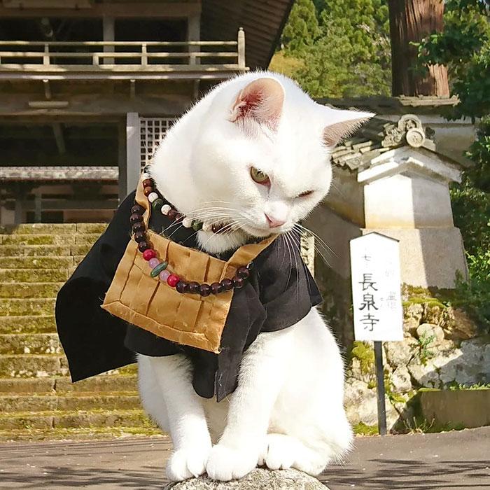 忠誠貓奴必參拜的「日本貓貓寺」住持不是人...信徒更虔誠!