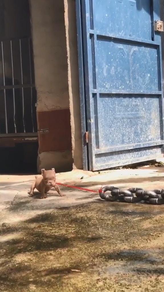 影/內有惡犬驚險瞬間被瘋傳 毛小孩「現出真身」後笑翻全網!