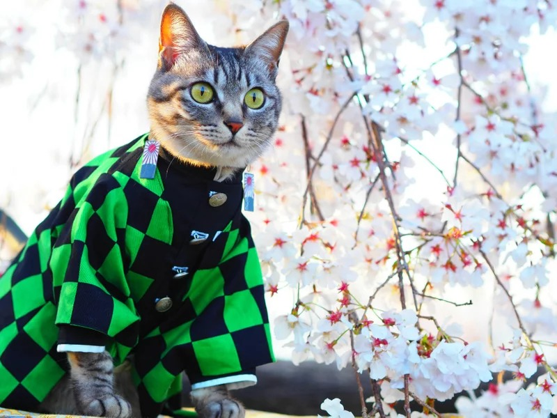 貓咪版《鬼滅之刃》Cosplay集合!貓主子變身最強柱集合「蝴蝶忍喵」仙氣爆表❤