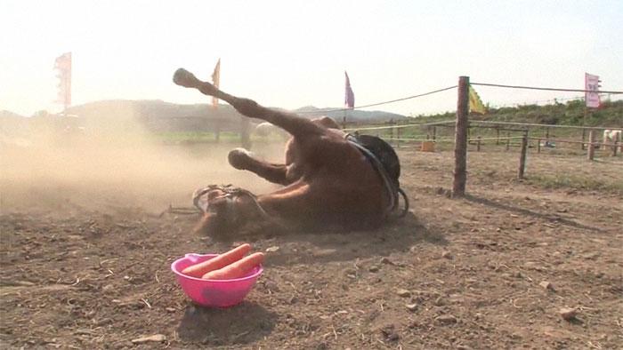 影/懶惰馬「不想被騎」只好倒地裝死 網友看到「超強神演技」笑翻:可以報名奧斯卡!