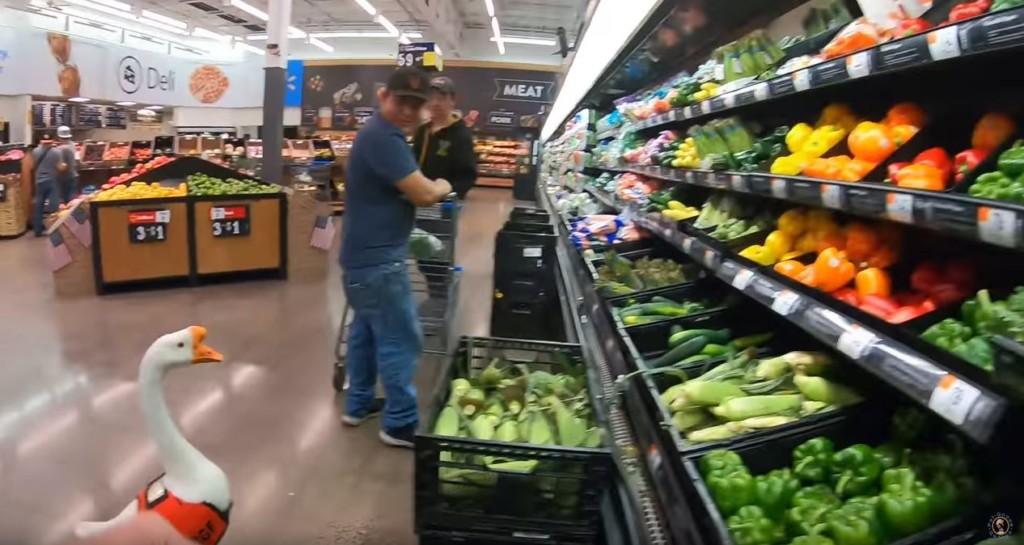影/爸爸帶「超萌鵝子」血拼 看到蔬菜區忍不住停下「呱呱呱」:把拔買菜給我吃~