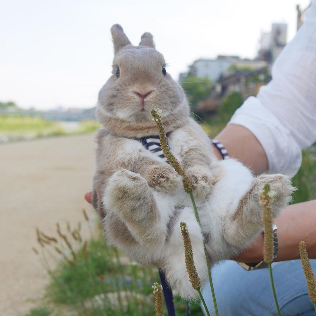 10張「每天被捧在手心」的軟萌小兔 牠的招牌「無辜表情」根本是天使!