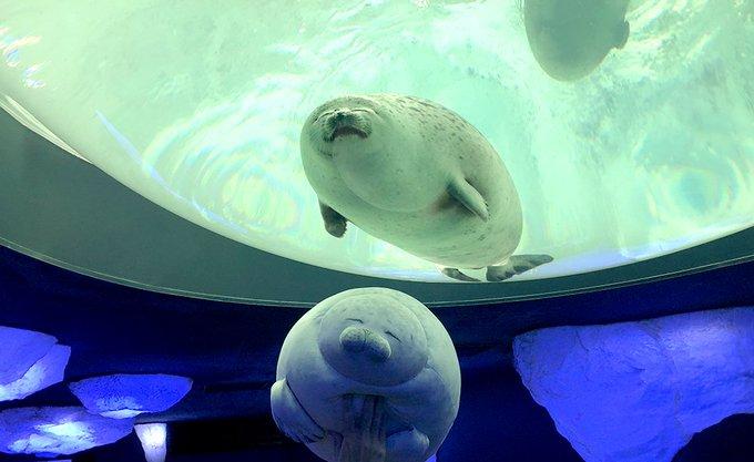 大阪水族館推「幸福海豹」超可愛實體化抱枕 「與本尊合照」畫面萌到不行!