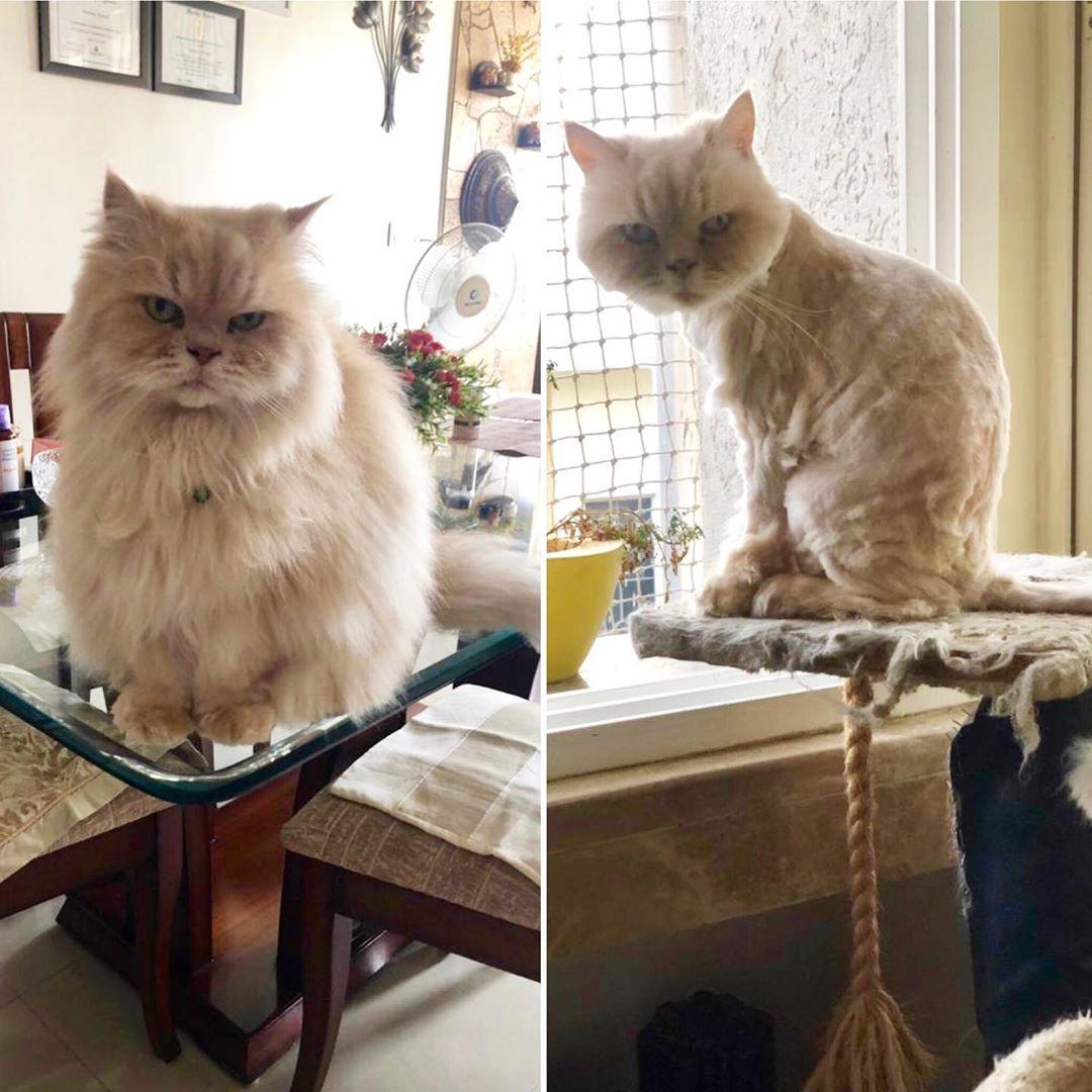 20張每個人「都該養寵物」的溫馨照 貓咪「被逮到偷吃」證據全在臉上!