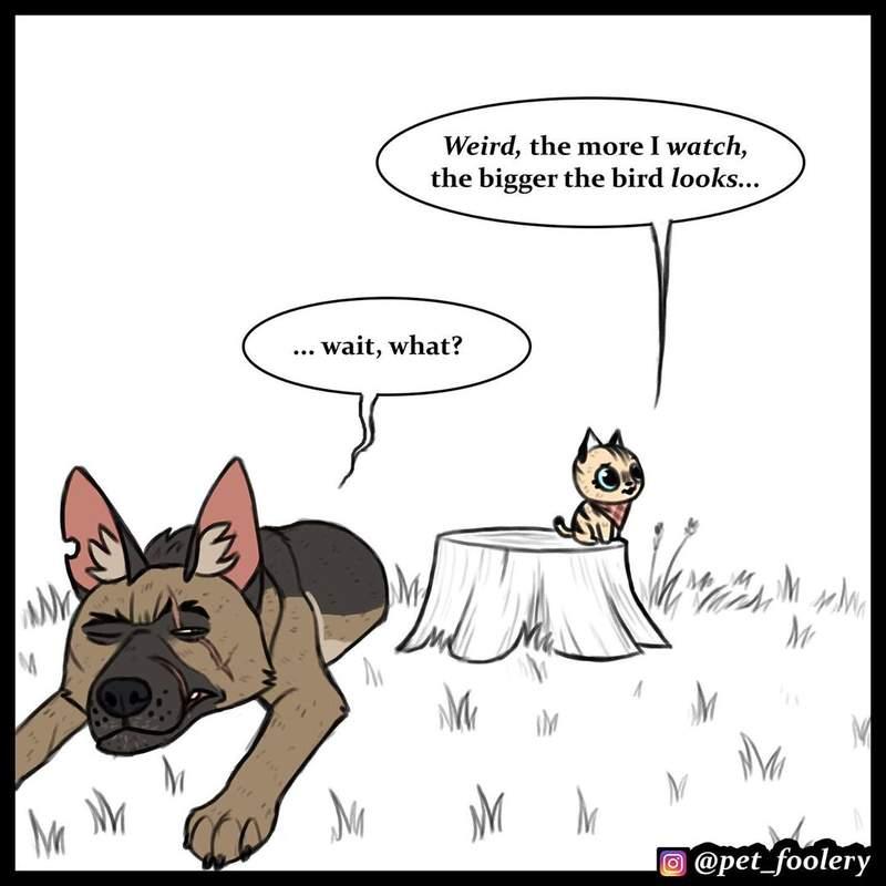 新系列「呆萌貓+傲嬌犬」漫畫曝光 小貓「超萌表情」連老鷹也被收服…狗狗甚至被逼爬樹!