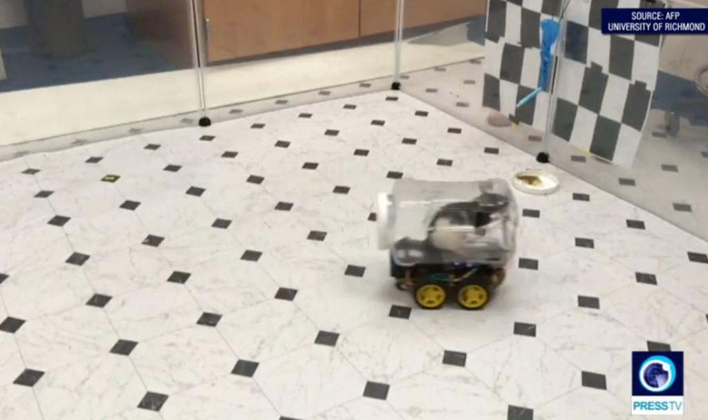影/科學家訓練「小老鼠開車」找食物 竟意外發現「超強學習能力」連人類都比不上!