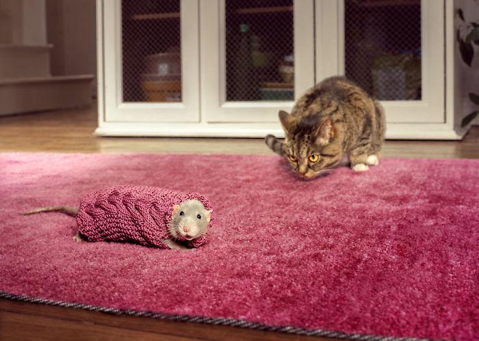 25張「猜你找不到人在哪」的保護色毛衣照 小老鼠的「特製針織衫」能幫牠逃過一劫嗎?