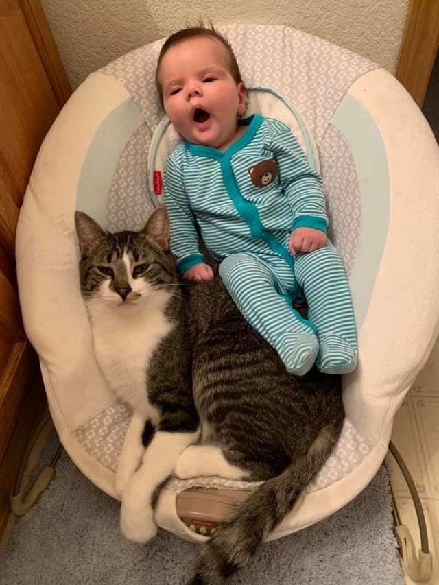 霸氣貓咪「陪寶寶躺搖床」畫面瘋傳 主人揭開「超可愛真相」全網融化!