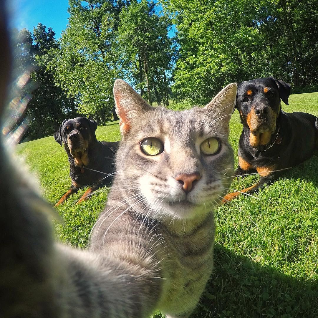 超會自拍的「大叔貓」 狂吸50萬粉絲 牠跟「狗朋友出門」完美變身最萌網紅!