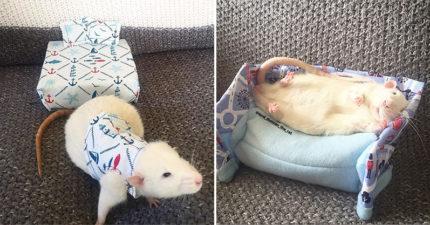 她幫寵物鼠做「客製迷你床」還配整套睡衣 牠試用「馬上睡翻」模樣超萌!