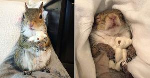 小松鼠每天「抱小熊熊」才睡得着 牠7年前「受困颶風」幸運活下來…現在變63萬網紅❤